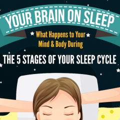 Your Brain on Sleep What Happens to Your Mind Body During the 5 Stages of Your Sleep Cycle